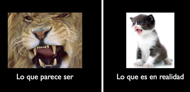 Leon vs Gatito